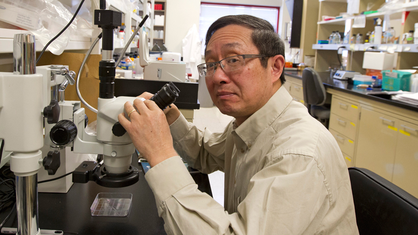 NIH awards Xuemin Wang $1.2 million to examine circadian rhythm and lipid metabolism, accumulation in plants, with implications for human health