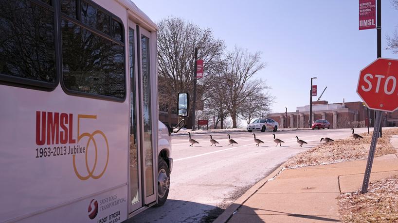 Eye on UMSL: Goose crossing