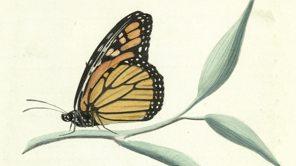 Mercantile's 'Audubon and Beyond' exhibition showcases 5 centuries of natural history