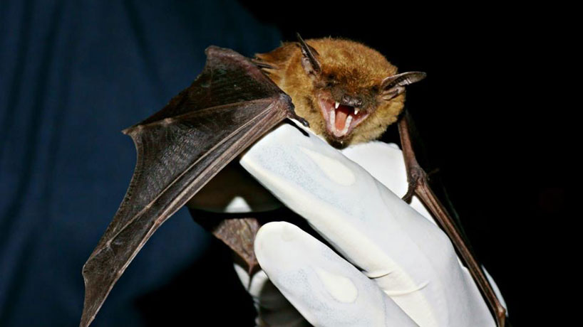 Harris Center's cemetery bat survey featured on St. Louis Public Radio