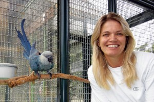 Jaqueline Goerck, president of the directing board for SAVE Brasil, poses with a Spix macaw, one of the species she's helping to save from extinction. (Photo courtesy of Jacqueline Goerck)