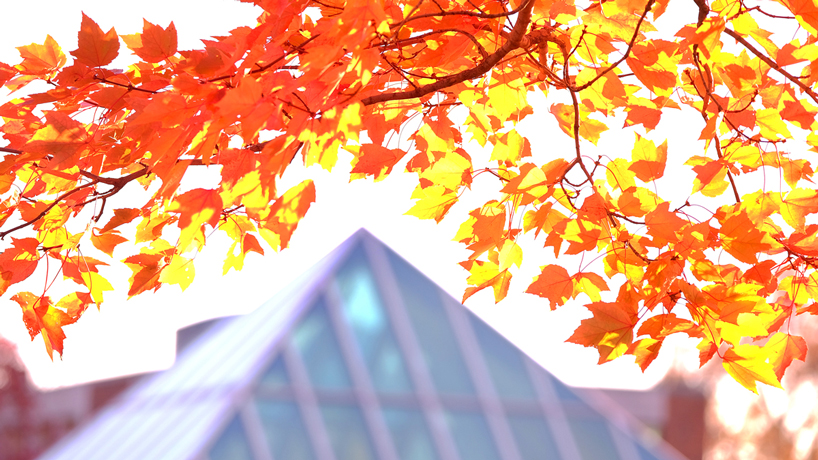 UMSL fall colors