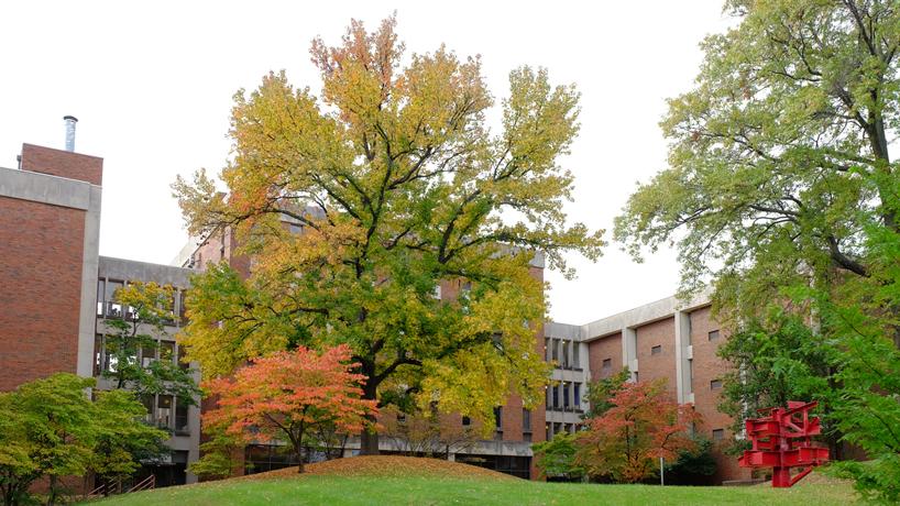 Eye on UMSL: Autumn majesty