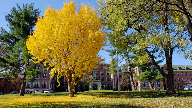 Eye on UMSL: Autumn gold
