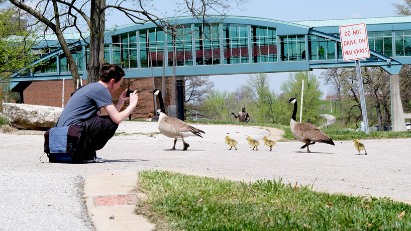 Eye on UMSL: Gosling crossing