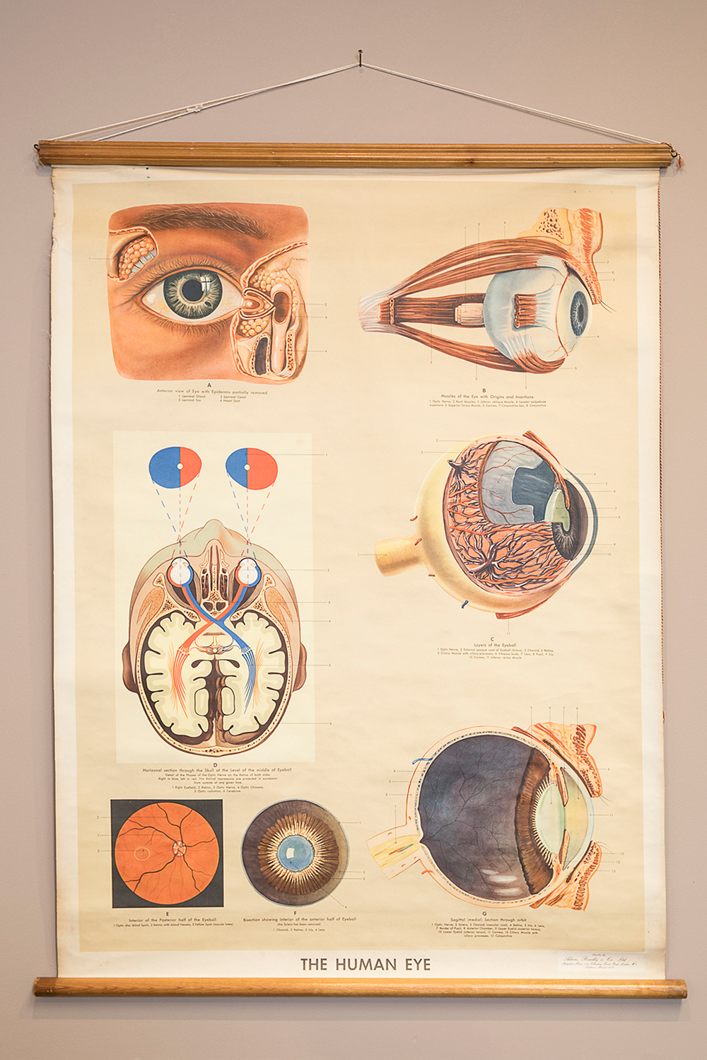 Eye antiques\' give optometry alumna\'s modern practice a vintage vibe ...