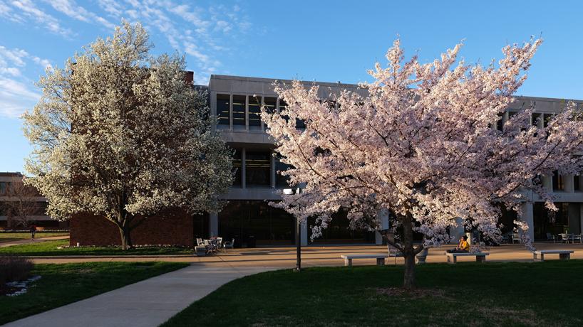 Eye on UMSL: In bloom