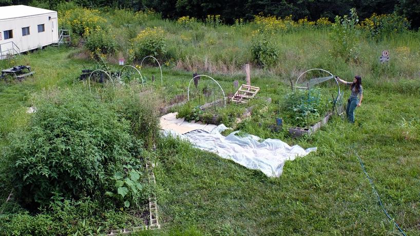 UMSL Community Garden donates summer produce to Operation Pathways
