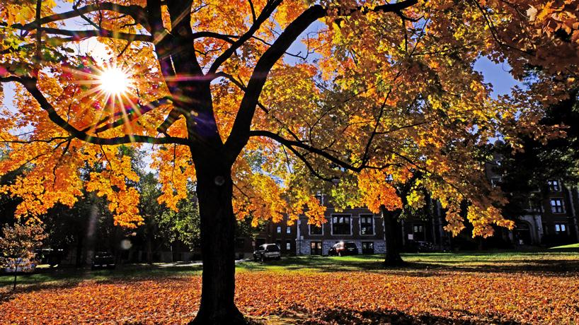 Eye on UMSL: Gleaming tree