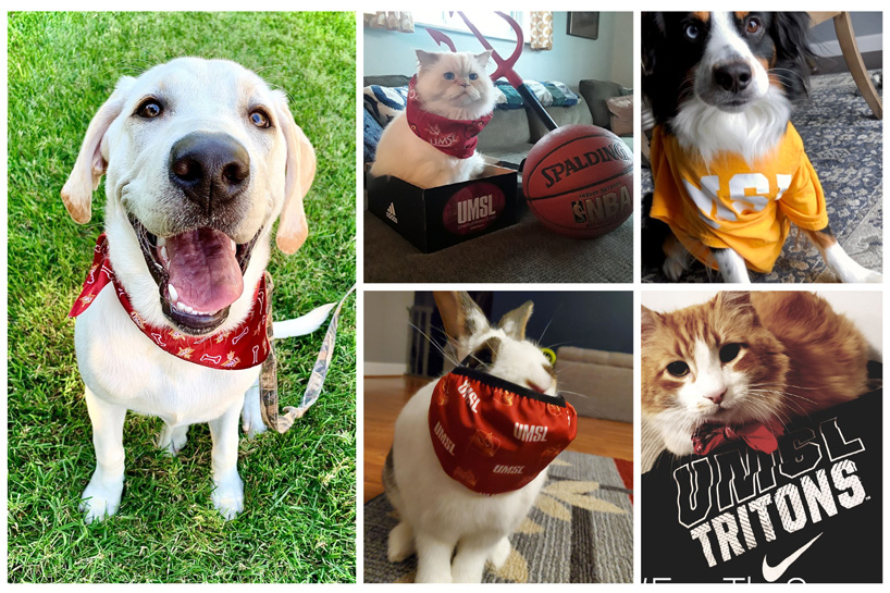 Most spirited pets