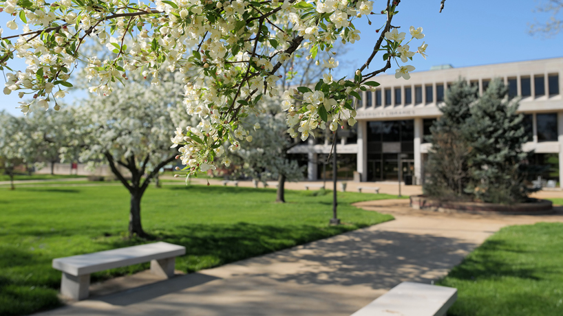 UMSL awards supplemental research funding to 79 faculty members through the CARES Act
