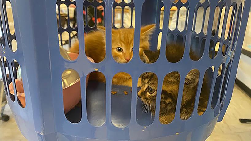 Seton Hall kittens