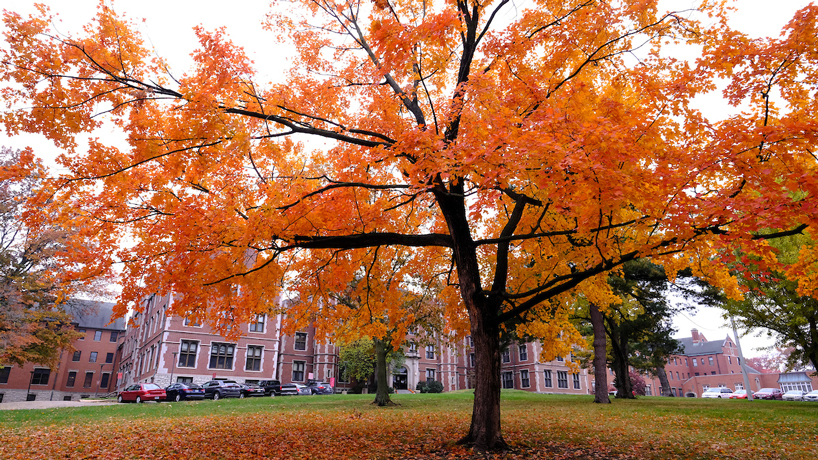 Tree fall colors on UMSL campus